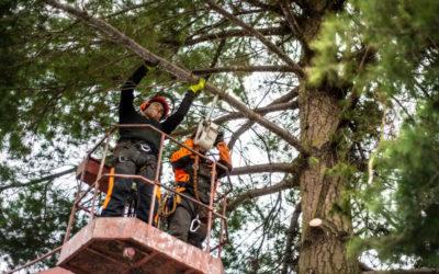 Professional Tree Trimming