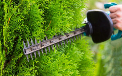 Choosing The Right Tree Trimmer