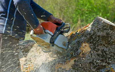 Tree Removal – How to Get the Best Deals on Online Tree Removal
