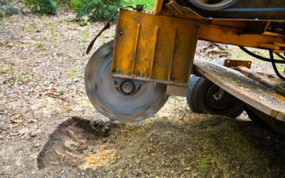 Using A Stump Grinder For Tree Stump Removal